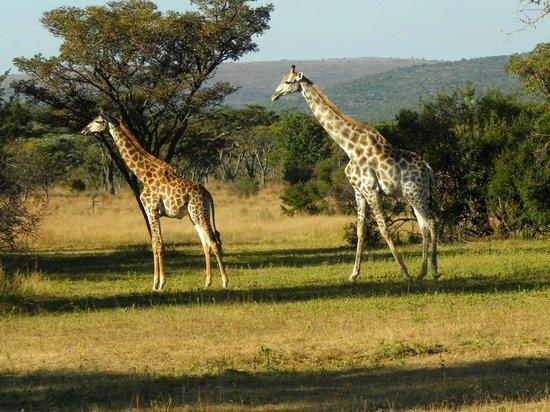 Kololo Game Reserve: En je kan er zo langs lopen