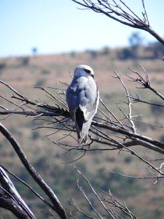 Kololo Game Reserve: Zo veel mooie vogels