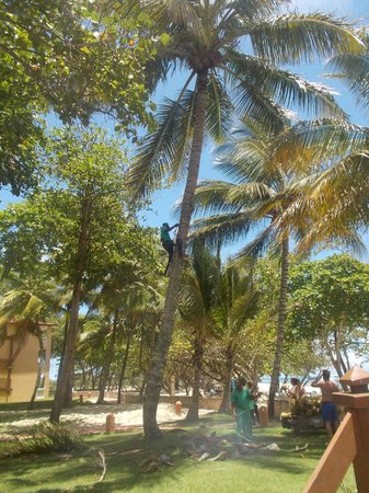 Be Live Collection Marien: Man collecting Coconuts