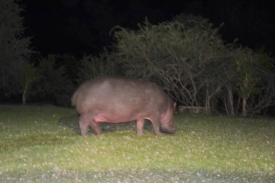 Ilala Lodge : Last night's visitor outside our room!