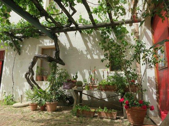 Azienda Fontanasalsa : Courtyard trellis with 200 year-old grape vine