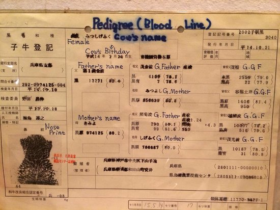 Steak House Yoshida: The cows here came with certificate, nose print, father & mother's name!