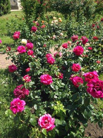 Botanical Garden: Roses