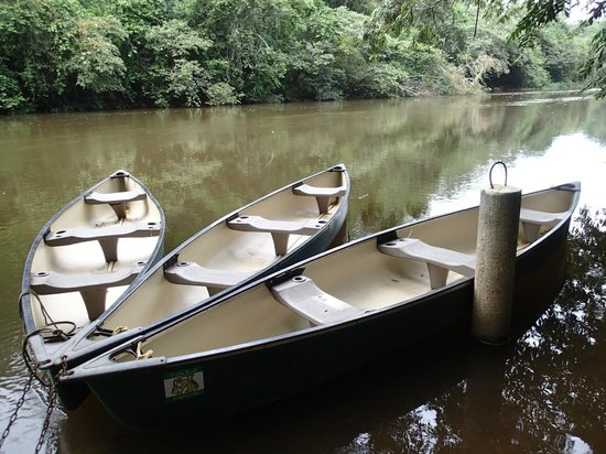 Table Rock Jungle Lodge: Canoes on Macal River - Chaa Creek Lodge just 15 minutes up river...