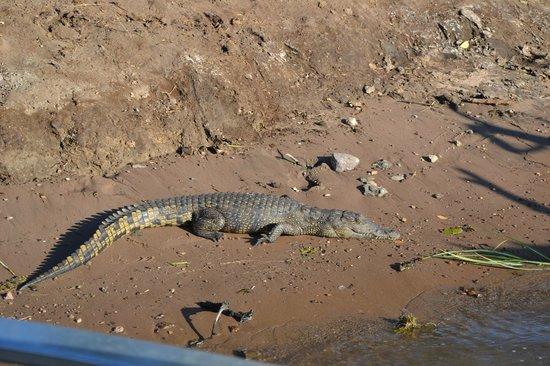 Cresta Mowana Safari Resort and Spa : Only 5 or 6 feet long....