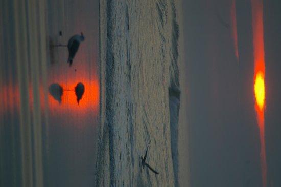 Roman Holiday Motel: sunrise