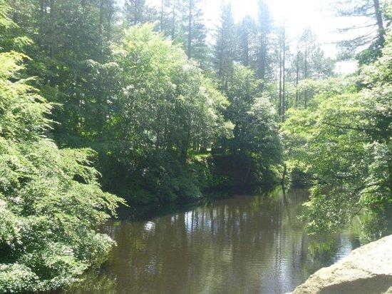 Derwent Dam: such green