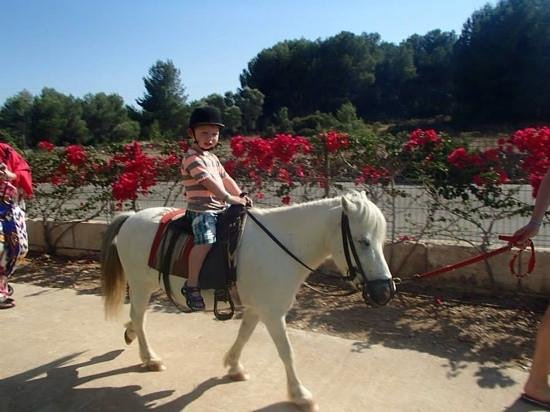 Viva Can Picafort: Pony ride (€6 for 25 mins)
