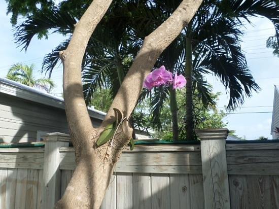 Villas Key West: i loved this
