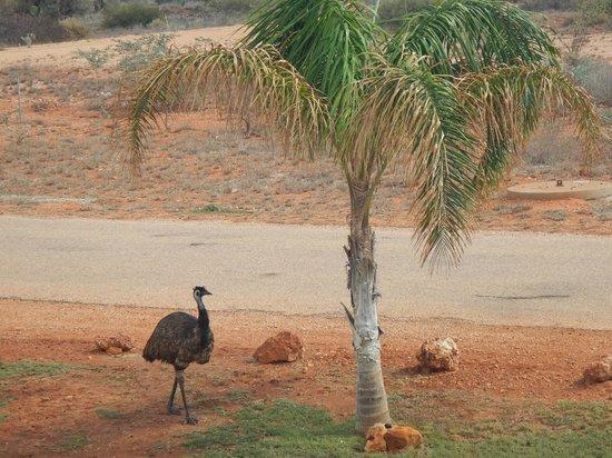 Sea Breeze Resort : emu
