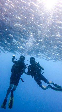 Scuba Junkie Diving: at Sipadan!!!!