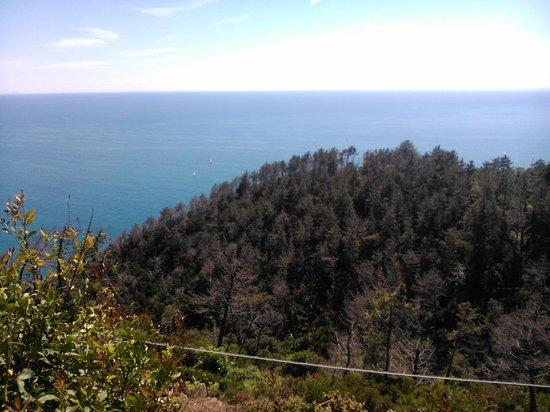 Due Gemelli : La forêt et la mer...