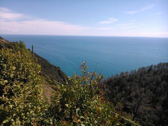 Due Gemelli: La mer et la forêt...