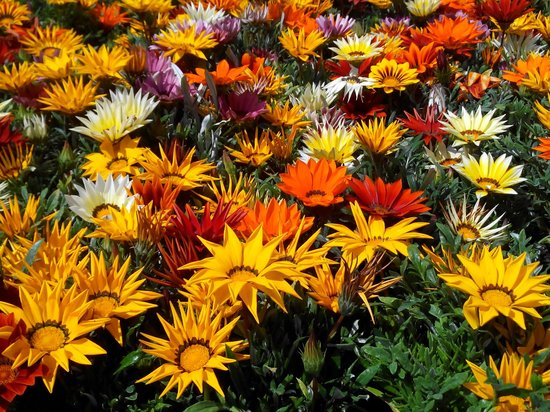 Abbaye de Chaalis: Vente de fleurs