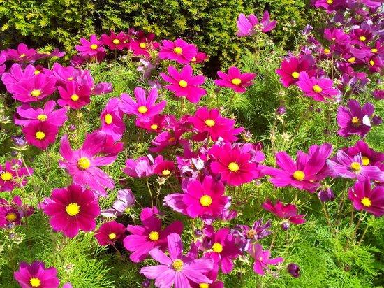 Abbaye de Chaalis: Fleurs