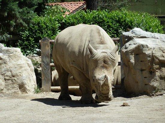 Parco Faunistico le Cornelle: Rinoceronte