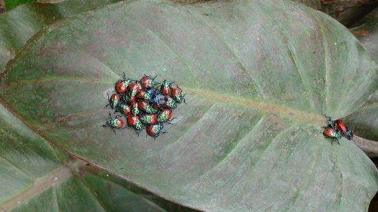 Valhalla Experimental Station: Bugs on a leaf