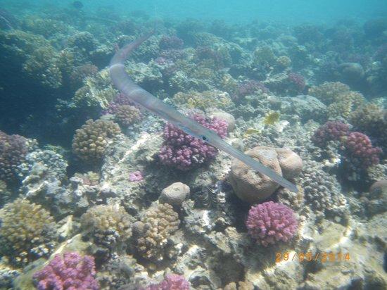 Siva Port Ghalib : рыба