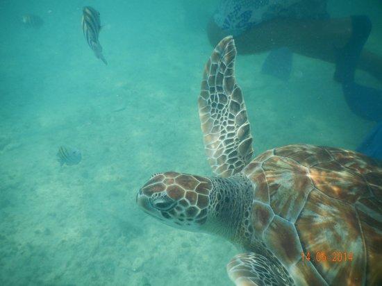 FatCat Ocean Adventures: Turtles while snorkelling