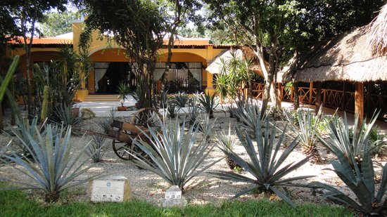 Viva Wyndham Maya : restaurant mexicain