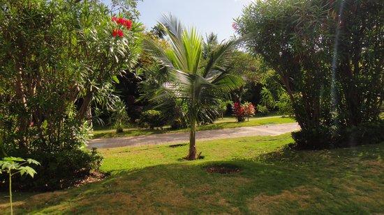 Viva Wyndham Maya : jardin