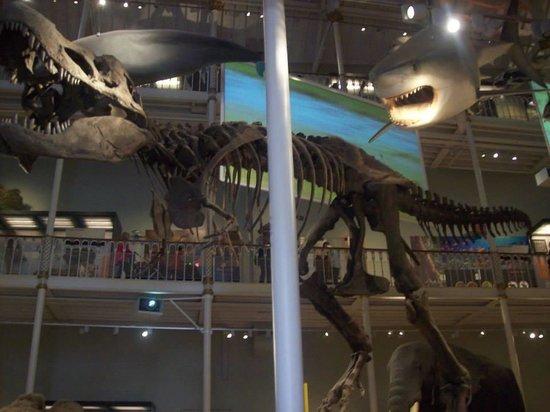Museo Nacional de Escocia: Dinosaur