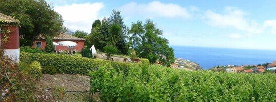 Quinta das Vinhas: Les vignes de la quinta