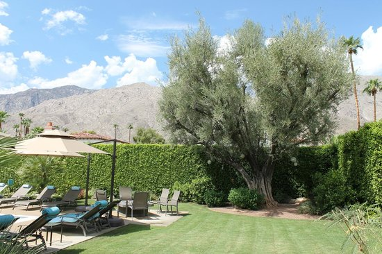 Desert Riviera Hotel : By the pool – watch the Hummingbirds here!