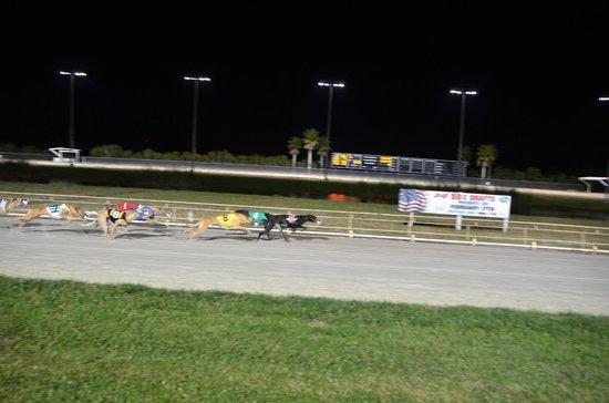 Daytona Beach Kennel Club Course