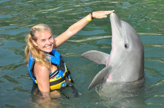 Hyatt Ziva Los Cabos: At Dolphin Discovery