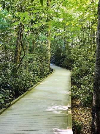 Boardwalk at Dingmans Falls