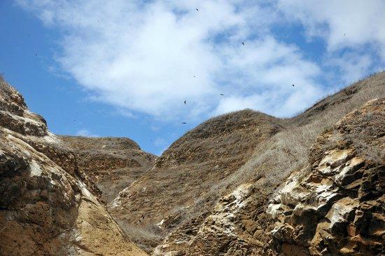 Kicker Rock : Nests on Leon Dormido rocks.