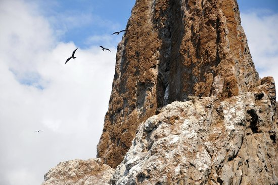 Kicker Rock: Frigate birds nesting