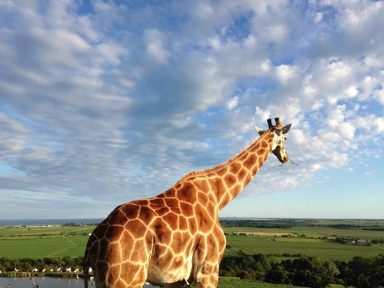 Giraffe Lodge: Our morning view.