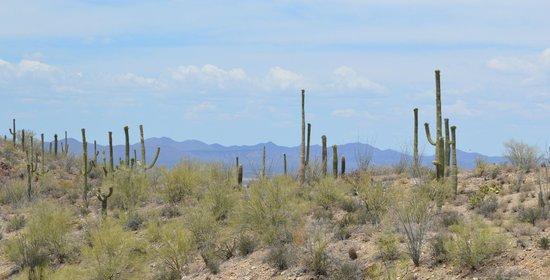 Arizona-Sonora Desert Museum: Pretty view
