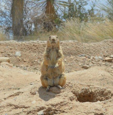 Museo del Desierto Arizona-Sonora: I loved this fatty!