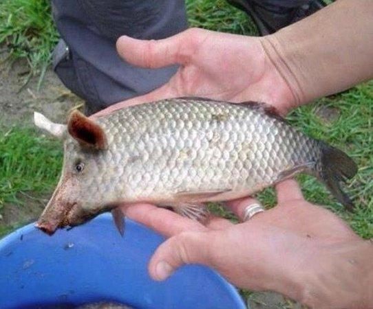 Panama Big Game Fishing Club Day Tours: Fisch, ohne Angel gefangen....