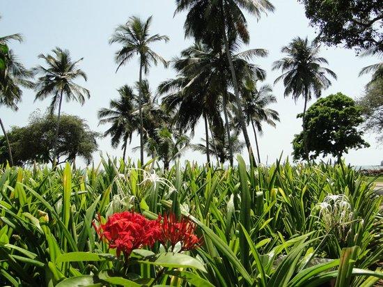 Grand Hyatt Goa: Flora