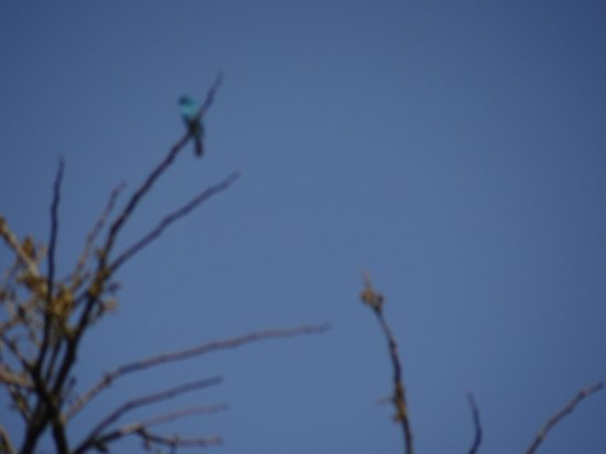 Ialong Park: A beautiful blue bird. (couldn't identify it)