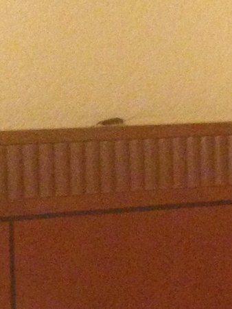 Courtyard by Marriott Palm Springs: 1 of 2 cockroaches found in room 226
