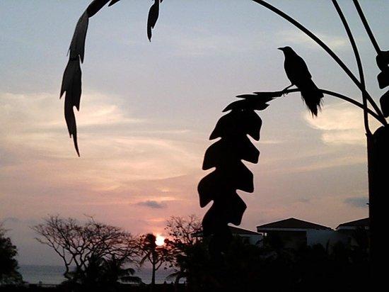 Decameron Barú: Atardecer desde el hotel con pájaro típico de la región
