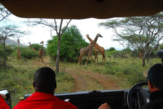 Campi ya Kanzi: Out on a game drive