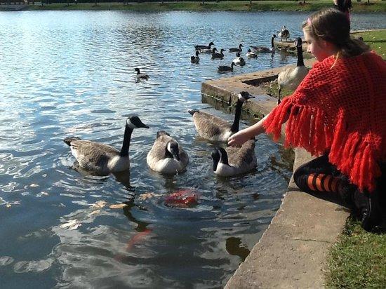 Daughter feeding ducks at Big Spring park