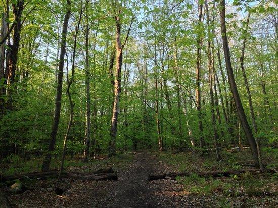 Lye Brook Falls: beautiful canopy