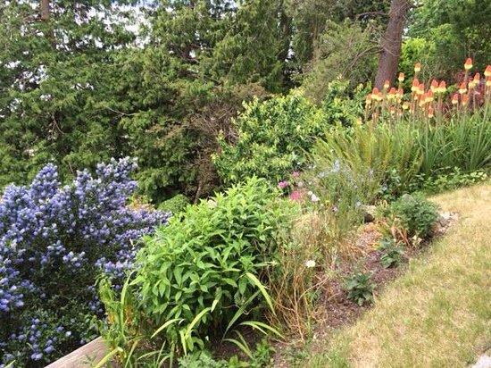 SunCatcher Oceanside B&B: garden area outside your room