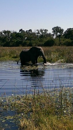 Wilderness Safaris Savuti Camp : Elephant