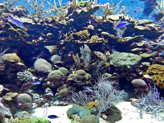 The Florida Aquarium : Amazing collections of coral