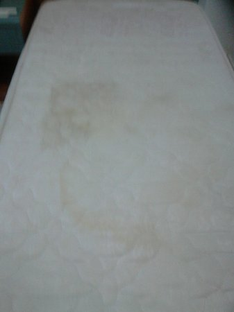 Long Beach Apartments : urine stained mattress on my bed