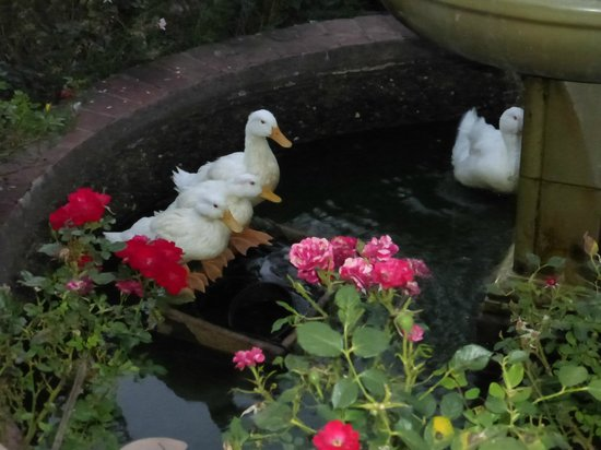The Inn on Knowles Hill Bed and Breakfast Hotel : Ducks on the pond
