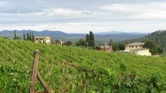Dievole: Vineyards